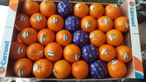 Naranjas Desayuno Valenciano