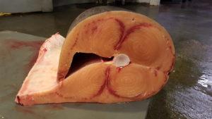 mercado-del-pescado-mercavalencia-by-sonia-selma-1
